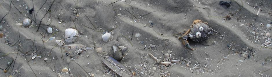 Strand Nordsee, Sandstrand Amrum, Reisen Deutschland